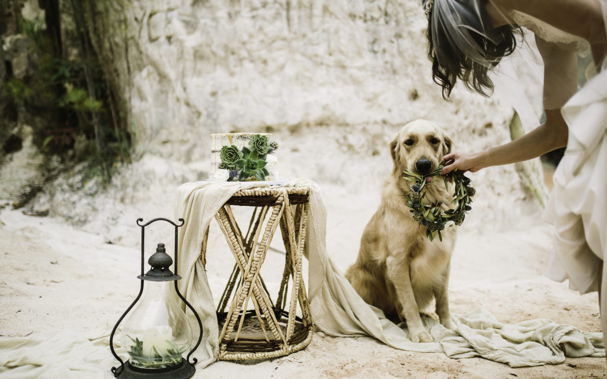 8 Tips on Including Your Pup in Your Wedding